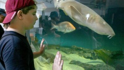 boy looking at aquarium fish in the Dauphin Island Sea Lab Estuarium