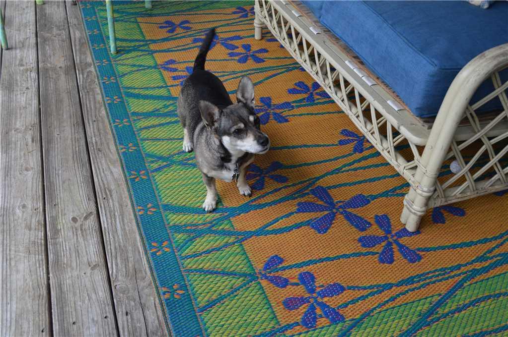 102 Beach Boho guard dog